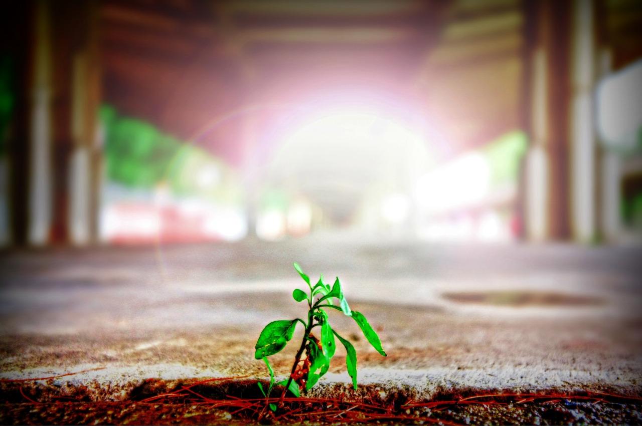 ISO 14001 System Zarządzania Środowiskiem